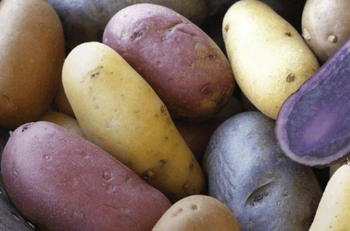 Profile --- Fingerling Potatoes